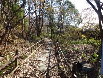 鎌倉市・大船フラワーセンターの森の小道