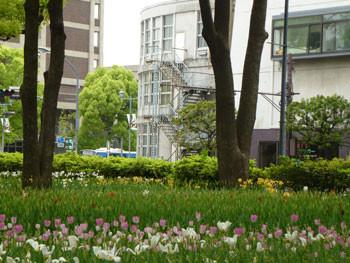 横浜公園からみなと大通り