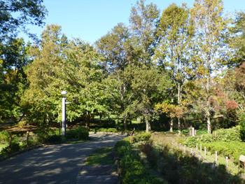 大和市・ふれあいの森の親水広場