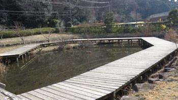 藤沢・引地川親水公園の遊水地のウッドデッキ