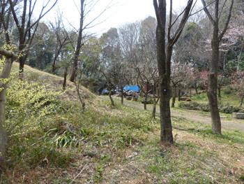 横浜・四季の森公園の炭焼き小屋と梅林