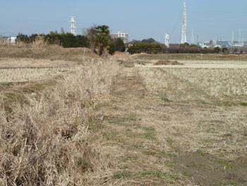 藤沢市・引地川親水公園付近の田畑