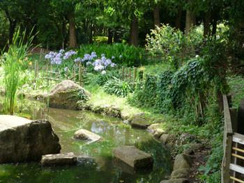 茅ヶ崎・中央公園の池