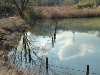 横浜市・舞岡公園のなみ池