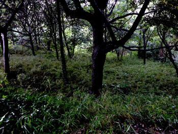 横浜市・舞岡公園の原始林