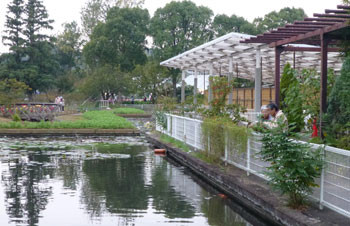鎌倉・大船フラワーセンターのスイレン池