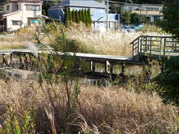 藤沢・引地川親水公園の湿性植物園とウッドデッキ
