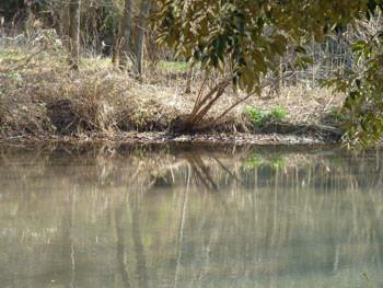 横浜市・舞岡公園の大原おき池