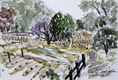 藤沢・引地川親水公園の木々と畑