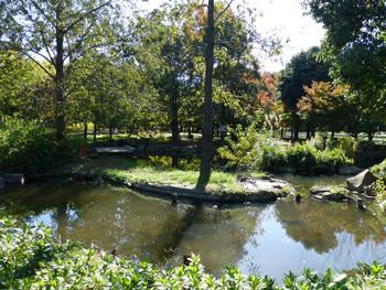 大和市・ふれあいの森の池