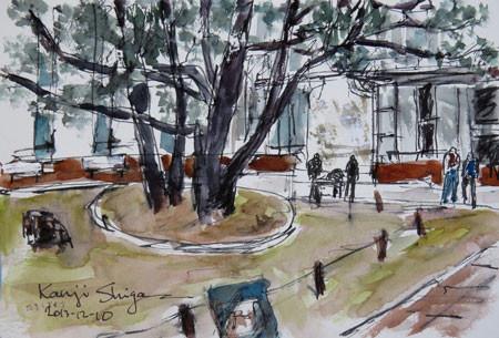 横浜・横浜開港資料館内のたまくすの木
