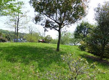 藤沢市・引地川親水公園の樹木