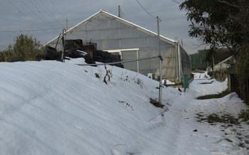 藤沢・雪景色とビニールハウス