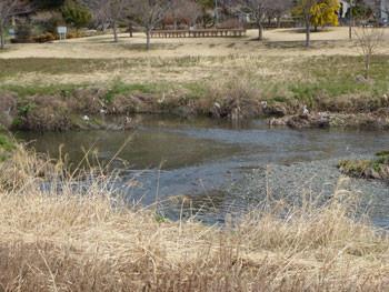 藤沢市・親水公園の引地川の水辺