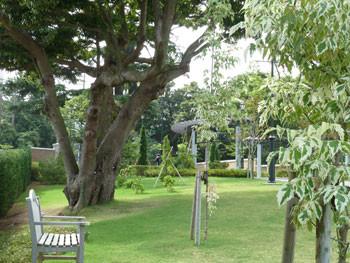 横浜元町・アメリカ山公園の大きな樹