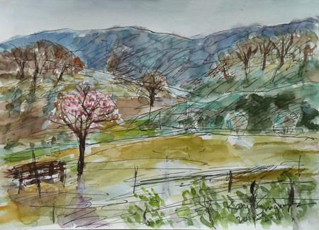 横浜市・中丸の丘の梅の木