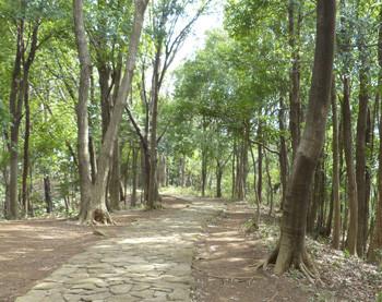 横浜・四季の森公園の散策歩道