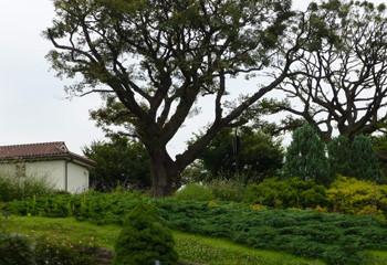 横浜・港の見える丘公園のイギリス館と木々