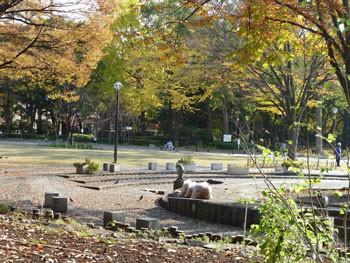 横浜・横浜公園の日本庭園付近の紅葉