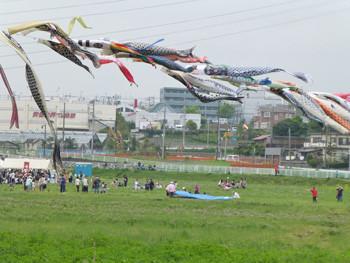藤沢市・石川のレンゲ祭り