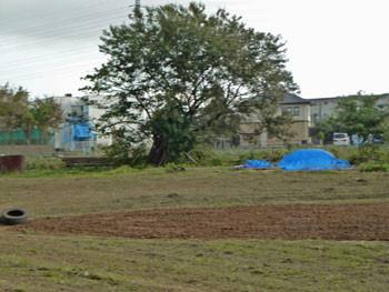 藤沢市・石川の畑の中の一本の木