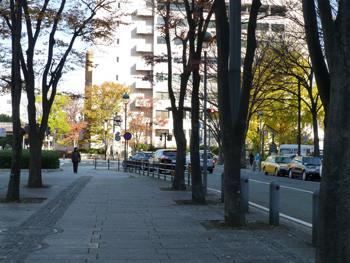 横浜・開港広場の並木