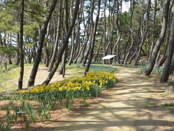 藤沢・辻堂海浜公園の松林