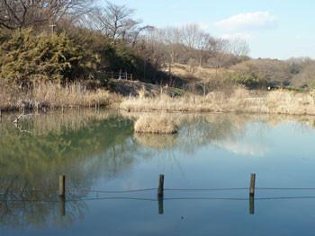 横浜市戸塚区・舞岡公園のなみ池