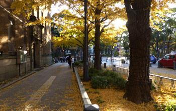 横浜・夕暮れの日本大通り