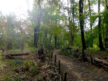 大和市・泉の森のくぬぎの森