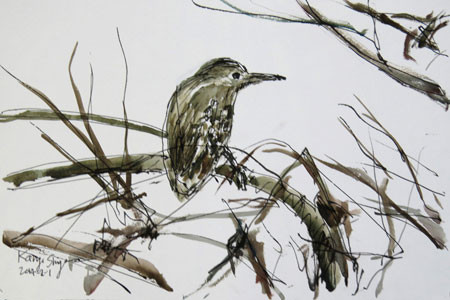 藤沢・引地川親水公園の鳥
