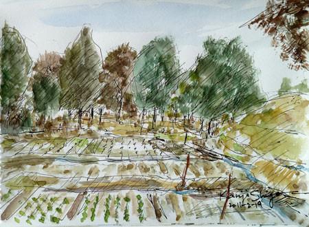 藤沢市大庭・畑の中の雑木林