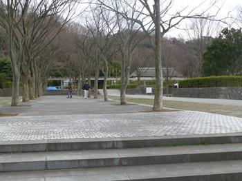 藤沢・新林公園の並木