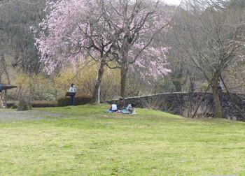 横浜・四季の森公園のサクラと花見客