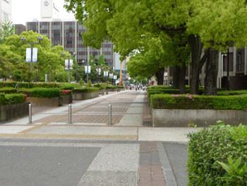 横浜市・市役所前のくすのき広場