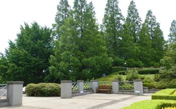 横浜・イタリア山庭園の樹木