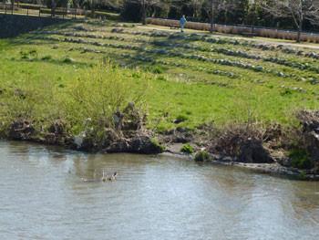 藤沢市・引地川の水辺