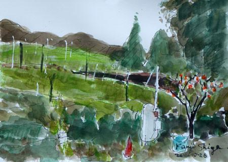 藤沢市・石川のブドウ畑