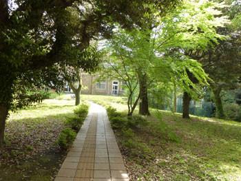 藤沢市・県立教育センターの小径