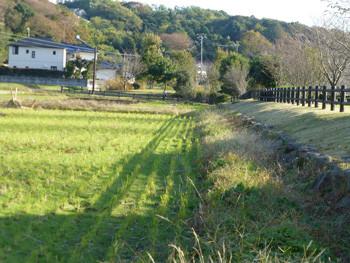 藤沢・引地川親水公園脇の畑と白い家