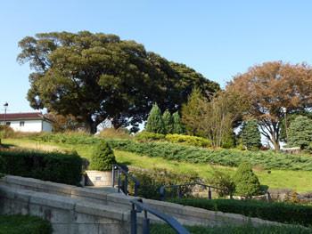 横浜・港の見える丘公園