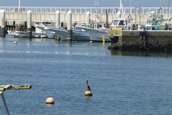 藤沢市・片瀬漁港とウミウ