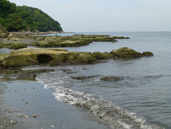 藤沢市・江ノ島の岩場