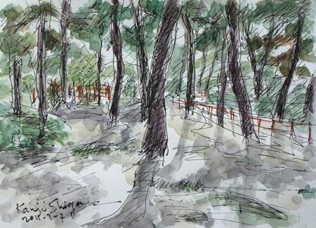 茅ヶ崎市・茅ヶ崎美術館の松林