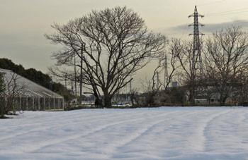 藤沢・雪の畑の中の木々