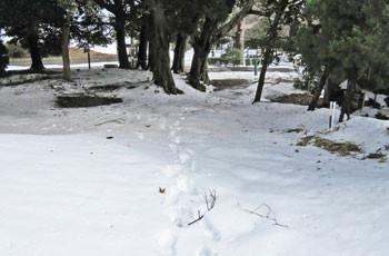 藤沢・グリーンハウスの庭