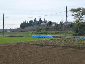 横浜市青葉台・寺家ふるさと村の果樹園