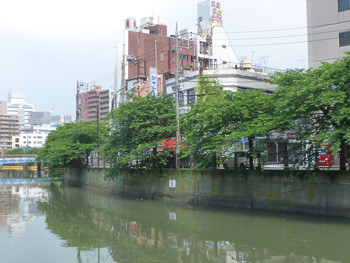 横浜市・日ノ出町界隈の桜道
