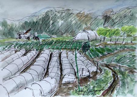 藤沢市・石川の保温育苗シートがある畑