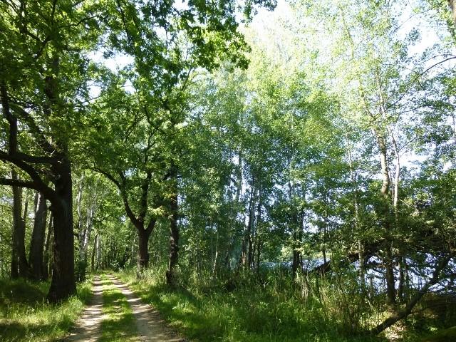 Wolfsradweg in der Lausitz bei Walddorf